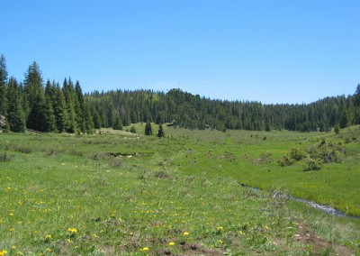 San Pedro Parks Wilderness, Santa Fe National Forest – New Mexico